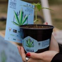Festival della cannabis light a Milano, 7mila piantine in regalo per spiegarne