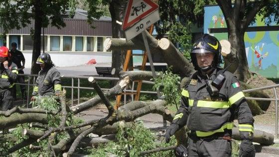 """Milano, quattro alberi caduti in una settimana: """"Controlli e abbattimenti programmati delle piante malate"""""""