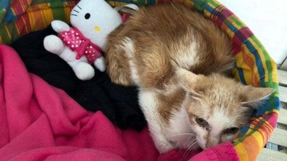Gatto arriva a Milano dalla Cina chiuso in un container per oltre un mese: è salvo