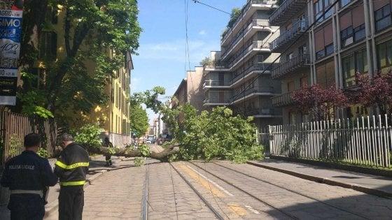 Milano: albero di 20 metri cade sulla strada, donna ferita lievemente
