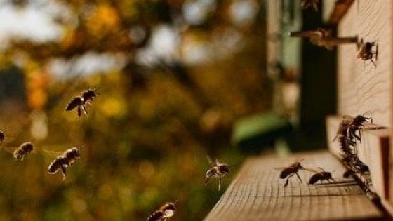 Bergamo, paura durante la gita: 10 bambini dell'asilo punti dalle api