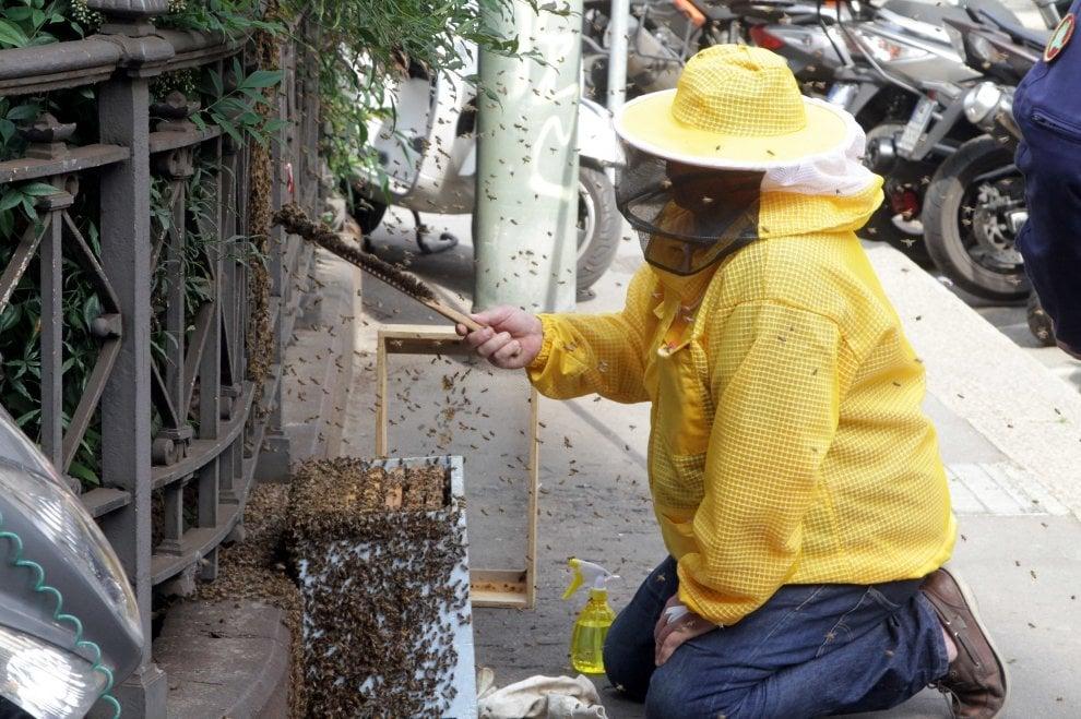 Milano, lo sciame di 120mila api 'fugge' dal tetto di Palazzo Marino per seguire la regina