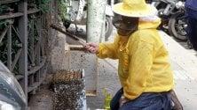 Sciame di 120mila api 'fugge' dal tetto di Palazzo Marino