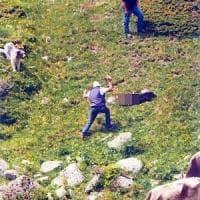 Brescia, uccisero il cane a bastonate: padre e figlio assolti anche in appello