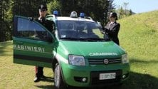 Brescia, in auto 300 uccellini destinati al mercato nero: arrestato