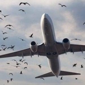Linate, atterraggio di emergenza per volo Alitalia per Palermo: stormo di uccelli nel motore