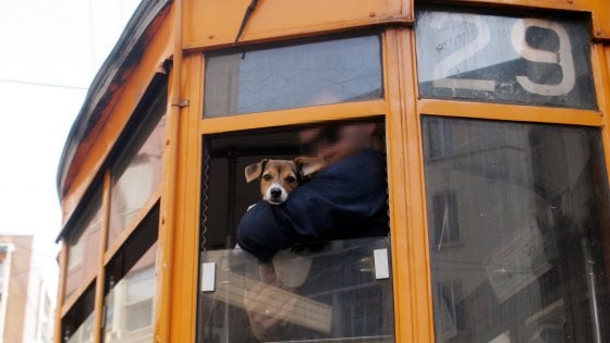 Milano, gli animali viaggeranno gratis su bus e metrò: intesa a Palazzo Marino