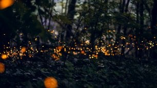 La magia delle lucciole illumina la notte del parco delle Cave