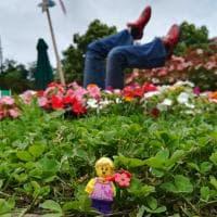 Varese, i personaggi Lego invadono il roseto