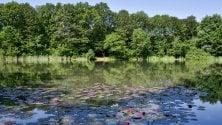 Sbocciano le ninfee:  il lago Azzurro come  un quadro di Monet