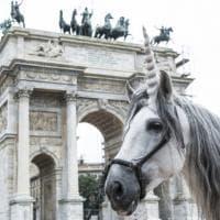 Milano: un unicorno gira per Parco Sempione, corsa al selfie mitologico