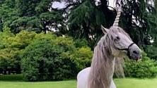 Un unicorno gira per Parco Sempione, corsa  al selfie mitologico