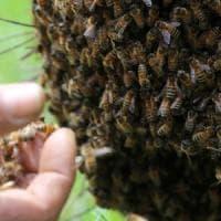 Bergamo, punta da un'ape mentre guida: 21enne causa scontro frontale