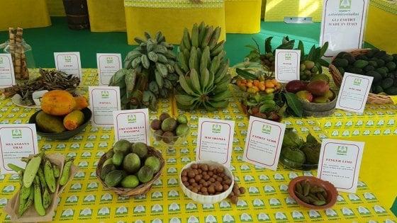 La frutta esotica diventa made in Italy: aumenta la coltivazione di prodotti tropicali al posto di arance e limoni