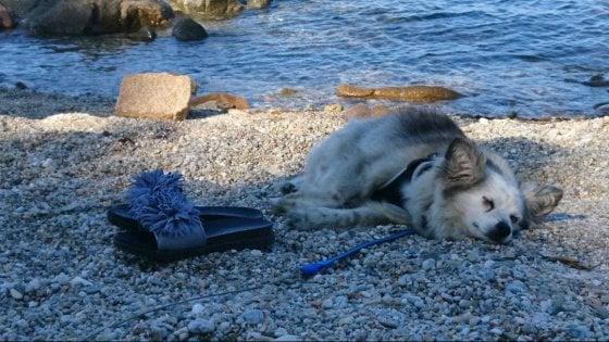 """""""Aiutateci a trovare chi ha investito la cagnolina Nina"""": a Sesto caccia social al pirata della strada"""