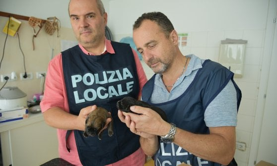 Milano, lasciata per giorni senza acqua e cibo con i suoi 13 cuccioli: salvata femmina di cane corso