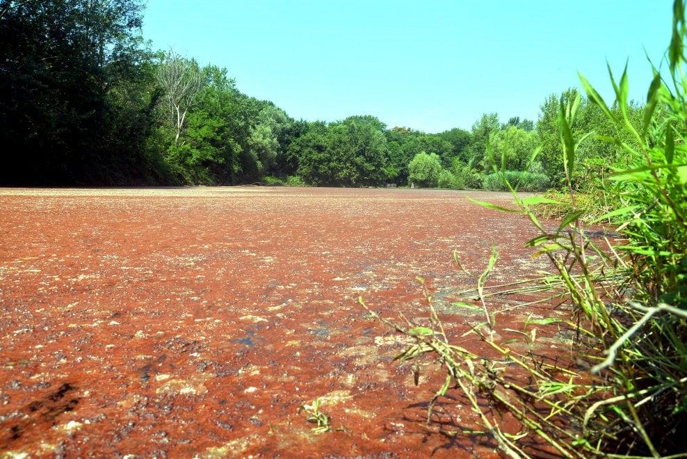 Milano, il mistero delle alghe al Parco delle Cave: il laghetto si tinge di rosso