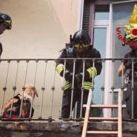 Milano, cane lasciato sul balcone sotto il sole battente: lo salvano i pompieri
