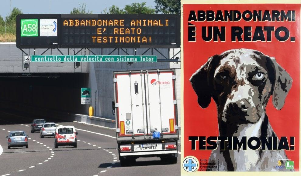 """""""L'abbandono è un reato, testimonia"""": la campagna per denunciare chi lascia gli animali per strada sui display della Teem"""