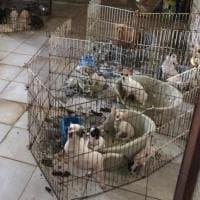 Allevamento lager di animali scoperto nel Pavese: cani, gatti e pulcini messi in salvo
