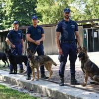 Zio, Bobo, Malu e Udon: ecco i quattro nuovi cani dell'unità antidroga della polizia locale di Milano