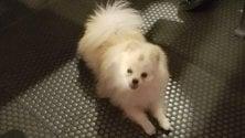 Leone-Wumin nel metrò: con l'appello Twitter Atm ritrova il suo padrone