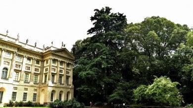 Foto  Platani, cedri e paulonie: gli alberi monumentali e quelli più belli di Milano