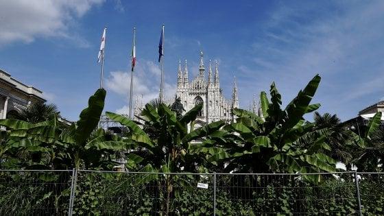 Milano, cambia lo sponsor per l'aiuola di piazza Duomo: addio a palme e banani di Starbucks?