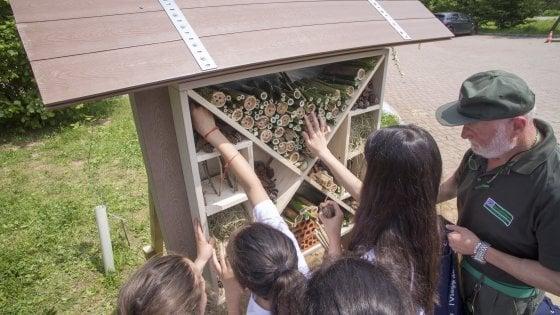 A Varese nasce il 'bug hotel': un rifugio per proteggere api, farfalle e coccinelle