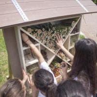 A Varese nasce il 'bug hotel': un rifugio per proteggere api, farfalle e