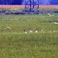 L'Oriente a Milano: lo spettacolo delle risaie con gli ibis in volo e i contadini cinesi