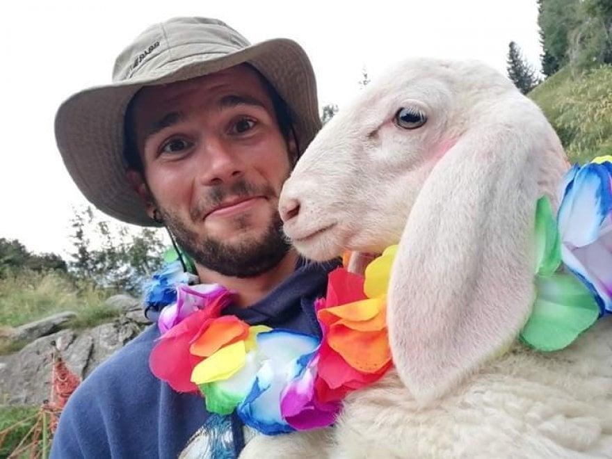 """""""Selfie con la pecora"""", il concorso fotografico della Bergamasca: vince il più originale"""