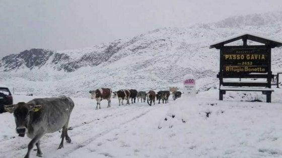 Maltempo, neve in Valtellina e Valchiavenna: è emergenza strade chiuse