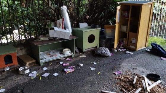 Raid nella notte, vandalizzata la colonia felina