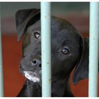 Cane segregato in balcone senza cibo né acqua: denunciata donna nel Bresciano