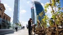 La vigna di Leonardo trasloca da piazza Scala ai grattacieli di CityLife