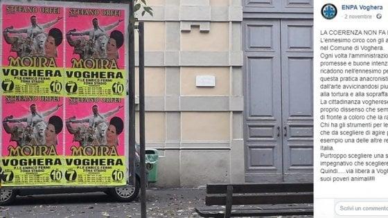 """Arriva il circo, a Voghera proteste contro il sindaco per l'uso degli animali: """"Boicottiamolo"""""""
