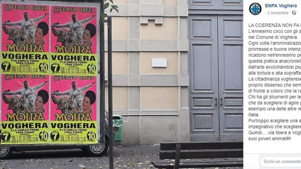 """Arriva il circo, a Voghera proteste contro il sindaco per l'uso degli animali: """"Boicottiamolo"""" - La Repubblica"""