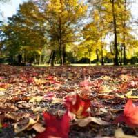 L'autunno al parco della villa Reale di Monza: gli scoiattoli giocano fra le foglie