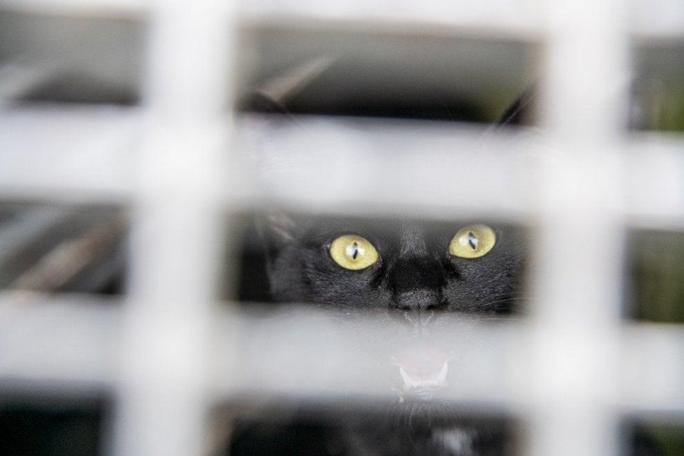 Il salvataggio speciale: il gatto finisce in un cunicolo della metropolitana di Milano