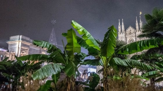Palme e banani in piazza Duomo per altri tre anni: Starbucks si conferma sponsor per la maxi aiuola
