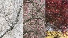 Se la natura si prende la scena: il calendario 2020 sulle stagioni di Milano