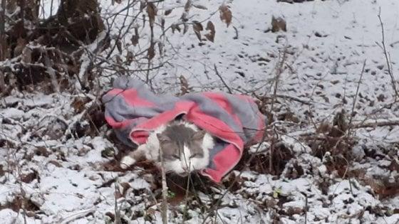 """""""Cerchiamo chi l'ha abbandonato e chi l'ha investito"""": appello social per il gattino salvato nella neve"""