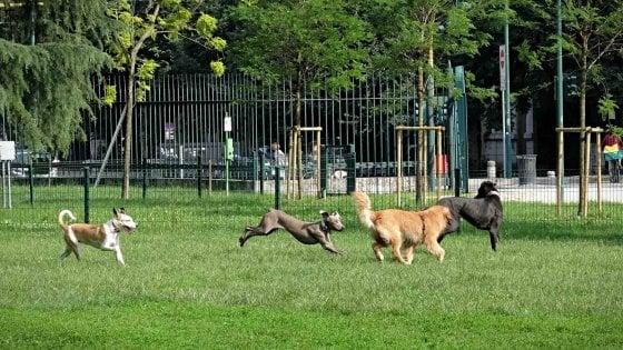 Patentino obbligatorio per i proprietari di cani pericolosi. E sulla città tornano i falchi per dare la caccia ai piccioni