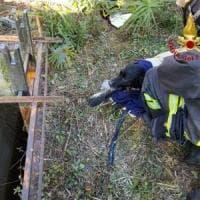 Il cane Thiago cade in un pozzo di acqua gelida: i vigili del fuoco varesini lo salvano