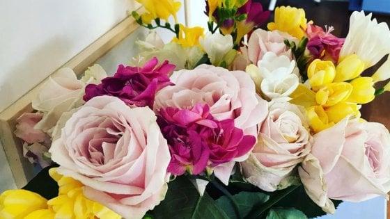 """La famiglia di geni """"Petalosa"""" che rende belli i fiori: la scoperta della Statale di Milano"""