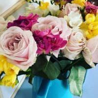 """La famiglia di geni """"Petalosa"""" che rende belli i fiori: la scoperta della Statale di..."""