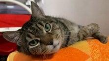 Festa del gatto: Biagio e gli altri che aspettano una famiglia al Parco gattile    · La mostra sui fumetti