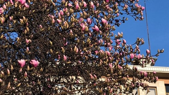Cocktail di pollini per le fioriture anticipate e polveri sottili: la stagione delle allergie è già partita