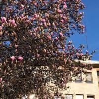 Cocktail di pollini per le fioriture anticipate e polveri sottili: la stagione delle...